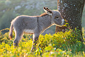 MAM 14 KH0239 01