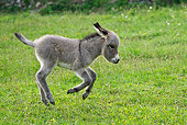 MAM 14 KH0241 01