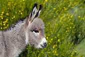 MAM 14 KH0243 01