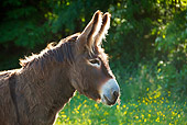MAM 14 KH0244 01
