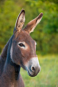 MAM 14 KH0246 01