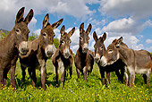 MAM 14 KH0251 01