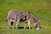 MAM 14 KH0255 01