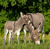 MAM 14 KH0256 01