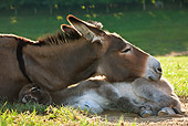 MAM 14 KH0259 01