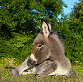 MAM 14 KH0260 01