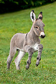 MAM 14 KH0261 01
