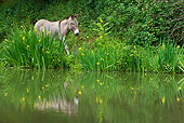 MAM 14 KH0263 01