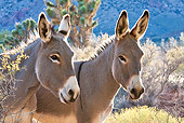 MAM 14 KH0303 01