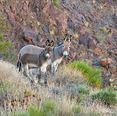 MAM 14 KH0305 01