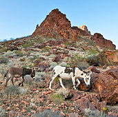 MAM 14 KH0306 01