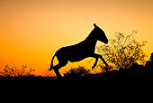 MAM 14 KH0309 01