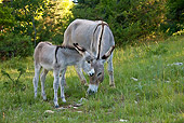 MAM 14 KH0310 01