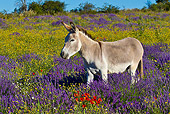 MAM 14 KH0313 01