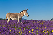 MAM 14 KH0315 01