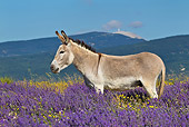 MAM 14 KH0316 01