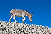 MAM 14 KH0318 01
