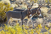 MAM 14 KH0322 01