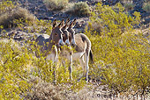 MAM 14 KH0323 01