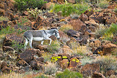 MAM 14 KH0324 01
