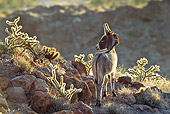 MAM 14 KH0326 01