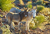 MAM 14 KH0330 01
