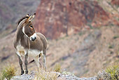 MAM 14 KH0334 01