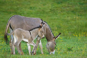 MAM 14 KH0338 01
