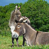 MAM 14 KH0350 01