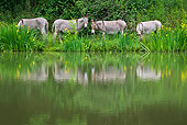 MAM 14 KH0352 01