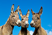 MAM 14 KH0355 01