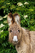 MAM 14 KH0356 01