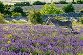 MAM 14 KH0360 01