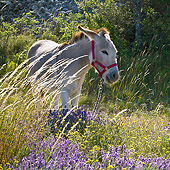 MAM 14 KH0363 01