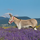 MAM 14 KH0364 01