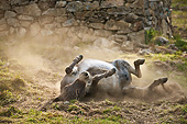 MAM 14 KH0371 01
