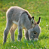 MAM 14 KH0373 01