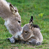 MAM 14 KH0384 01