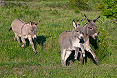 MAM 14 KH0389 01