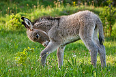 MAM 14 KH0390 01