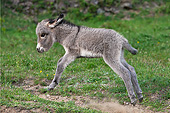 MAM 14 KH0392 01
