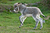 MAM 14 KH0393 01
