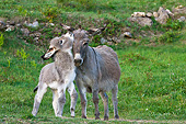 MAM 14 KH0411 01