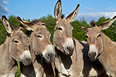 MAM 14 KH0412 01
