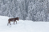 MAM 14 KH0415 01