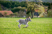 MAM 14 KH0424 01