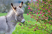 MAM 14 KH0425 01
