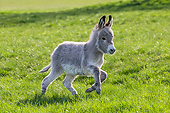 MAM 14 KH0426 01