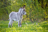 MAM 14 KH0427 01