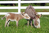 MAM 14 LS0014 01